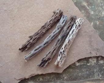 Cholla Cactus Skeleton Wood Pieces for Crafts Assemblage Jewelry Mixed Media Supplies Natural Organic Found Object