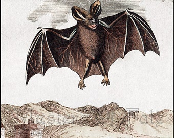 REMASTERED 1800's Flying BAT Lithograph Print Poster (with or without Frame) Various Sizes