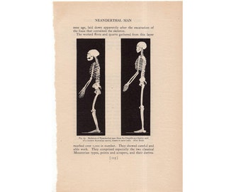 c. 1934 NEANDERTHAL SKELETONS lithograph - prehistoric man - human anatomy from the Smithsonian Museum - original vintage print