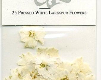 White Larkspur Pressed Flowers - pack of 25  1 inch diameter