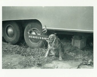 "Vintage Photo ""The Hendrickson's Dog"" Animal Pet Snapshot Antique Photo Old Black & White Photograph Found Paper Ephemera Vernacular - 200"