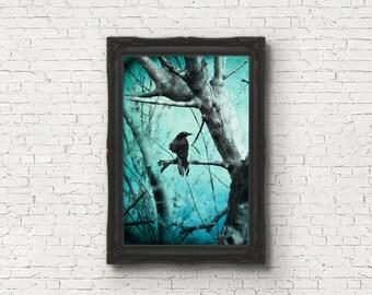 Ghostly - multiple sizes fine art photo - crow black bird raven aqua blue gray tree winter - free U.S. shipping