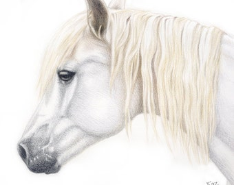 CUSTOM Sketched Horse Portrait + matching Card & Gift Tag, Horse lover Gift, Pony Portrait, Animal lover gift, Horse illustration, Horses
