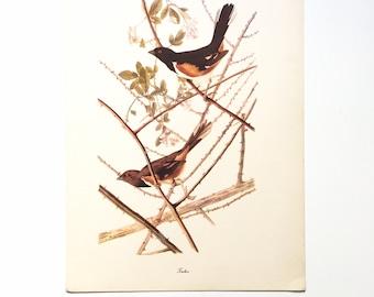 "Vintage John James Audubon Bird Print / Towhee / Vintage Natural Science Home Decor / Art Illustration / Great for Framing / 9"" x 12"" Art"