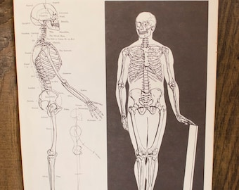 Vintage Anatomical Anatomy Medical Wall Decor / wall art