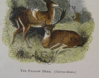 The Natural History of Selborne Gilbert White 40 Coloured Engravings 1851