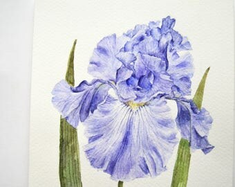 Original watercolor painting  Iris painting  Flower watercolor  Small painting  Original watercolor  Bright painting  Purple iris