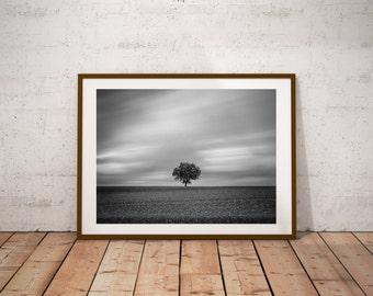 The Alone Tree Print