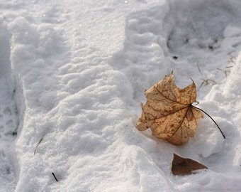 Fallen Golden Leaf In Snow - 5x7 Nature Art Photograph - Snow-Covered - Winter Art - Fading Light Art Photo - Liberty Images Limited Edition