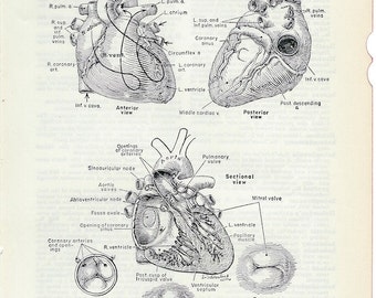 Human Anatomy The Heart - Vintage Medical Anatomy Illustration to Frame or for Collage, Mixed Media and Paper Arts PSS1664