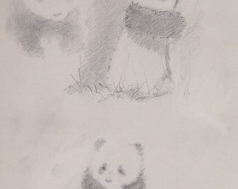 Original Sketch 'Three Pandas'