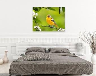 Baltimore Oriole, Wall Art Canvas, Bird Decor, Canvas Print, Stretched Canvas Art, Fine Art Photography, Bird Art, Wildlife Nature Print