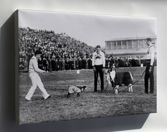 Canvas 24x36; Georgetown And Navy Mascots 1920S