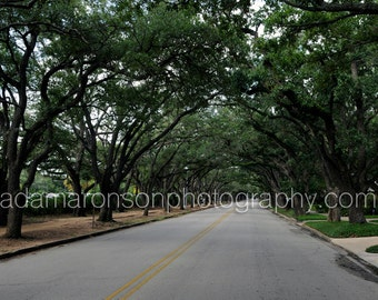 Photograph of SUNSET BLVD in the Rice University area of Houston, Texas
