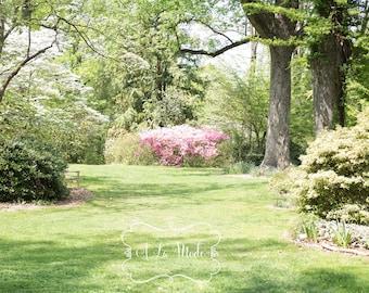 Azalea Garden Spring Digital Photography Background Collection Flowers