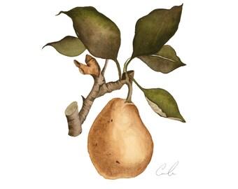 Watercolor Botanical Pear