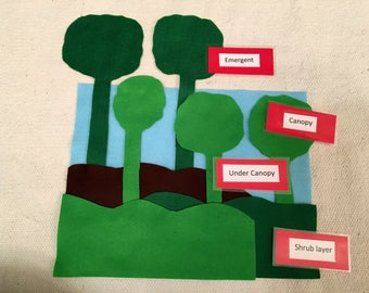 Montessori Work Layers of the Rain Forest Geography Area of classroom South Amercia Asia Australia North America Africa Rainforest