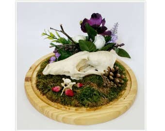 Real fox skull jaw animal bones display in bell jar display dome with bone, pinecone and flowers Taxidermy Oddities