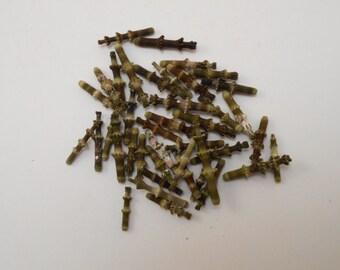 "200 (1 oz) of Tiny ""Bamboo"" Sea Urchin Spines Size range 1/2"" - 1"" Seashell Crafts"