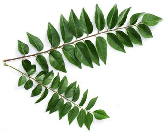 Homegrown Organic Curry Leaves