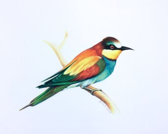 bee-eater bird fine art archival print, watercolor, animal art, giclee print, Illustration