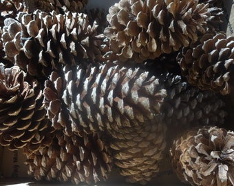 pine cones Natural Dried Florals, wreath supplies, home & living, floral supplies, cone shaped pods, dried flowers,