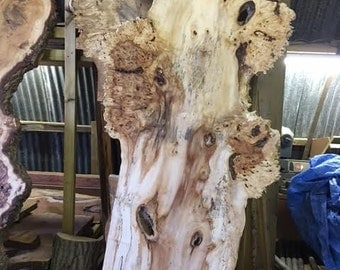 "A spalted burled horse-chestnut ""tree"" PRICE REDUCTION."