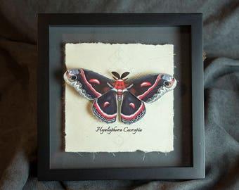 "Faux Taxidermy Shadowbox - 8""x8"" Cecropia Moth Shadowbox Art - Vegan Taxidermy Display"