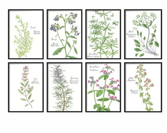 Botanical Kitchen Herbs Wall Art Print Set of 8 - Vintage Botanical Floral Herbs Prints - Herb Kitchen Decor Illustrations - Floral Herbs