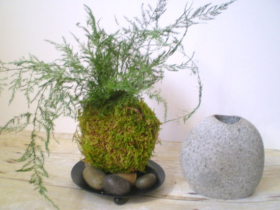 how to get rid of asparagus fern in the garden