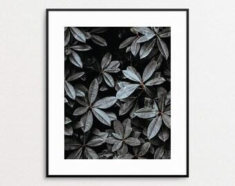 Rhododendron Print - Botanical Photo - Modern Wall Art - Botanical Art - Botanical Wall Art - Modern Photography Art Print - Giclee - Leaves