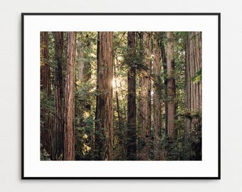 Redwood Forest Print - Forest Wall Art - California Redwoods Photo - Nature Print - Jedediah Smith Redwoods State Park - California Art