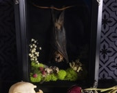 Hanging Fruit Bat Forest Shadow Box, Taxidermy, Real Mummified Bat, Victorian, Memento Mori, Gothic Decor, Preserved Specimen, Oddity