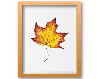 Autumn Prints, Leaf Printables, Leaf Watercolor, Autumn Leaves, Watercolor Leaves, Watercolor Prints, Fall Decor, Fall Decorations, Leaf Art