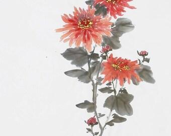 Pretty chrysanthemum
