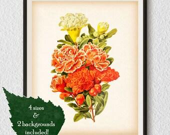 """Flower art print, Floral print, Antique botanical print, Pomegranate, Botanical wall decor, 8x10"""", 11x14"""", A4, A3, Flower wall art, #19"""
