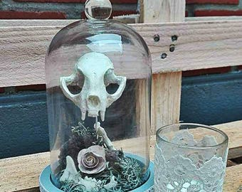 Bell glass, skull decor Moss and flower