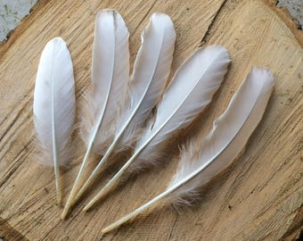 """5 x white goose feathers, naturally moulted with a tinge of grey approx  6 1/2"""" -  8 1/2 long natural"""