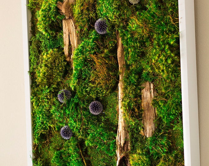 "Moss Wall Art ~ Moss Art Work ~ REAL Preserved Moss ~ No Maintenance Required ~ 20""x20"" ~ ""Bubble"""