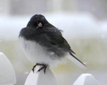 Junko in snowstorm