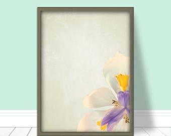 Floral art print, Flower poster, iris, simple flower print, wall hanging, minimalist print, flower, floral, flower photography, DOWNLOAD