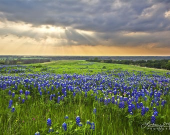 "Texas Home Decor | ""Bluebonnet Sunbeams"" 
