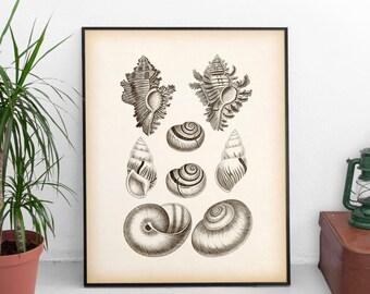 Nautical prints, Antique nautical prints, Wall art vintage, Shell prints, Printable print, Shell art, Download, 8x10 print, 11x14 print, JPG