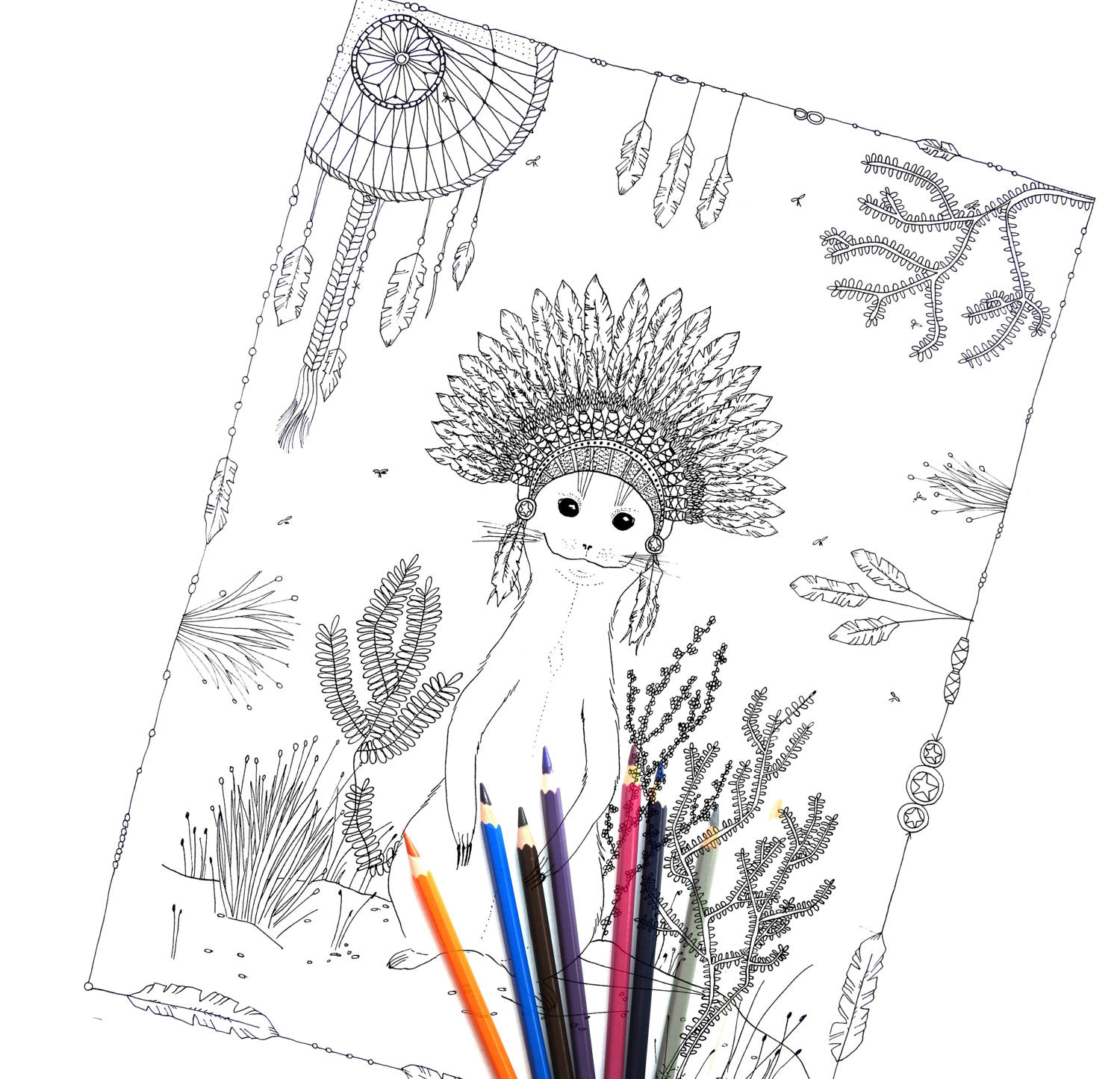 surikata coloring page colouring pages colouring