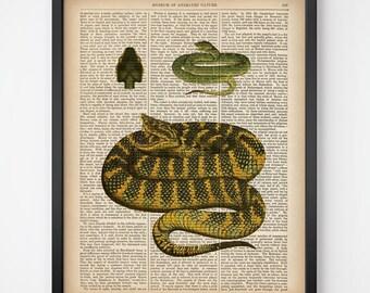 Printable snake print, Art print vintage, Upcycled, Animal dictionary, Print on dictionary, Animal print, Home wall art, 8x10, 11x14, JPG