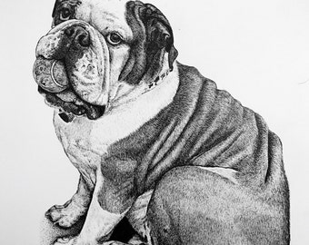 Bulldog Drawing in Pen and Ink