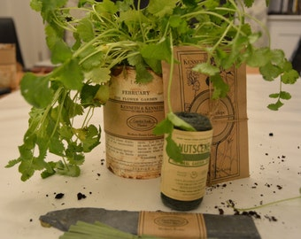 Gardener's Herb Collection: Coriander // Herb Garden // Herb Planter // Gifts for Her // Gifts for Him