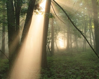 Crepuscular rays, Nature photography, Forest, Summer, Trees, Green, Woodland,