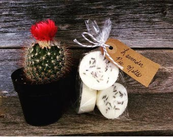 Soy Wax Lavender Pie Melts | Large Wax Melts | Pack of 4| Scented Wax Melts