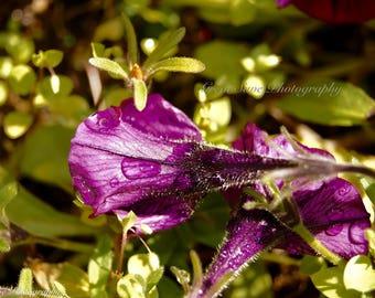 Purple Rain, Photography, Home Decor